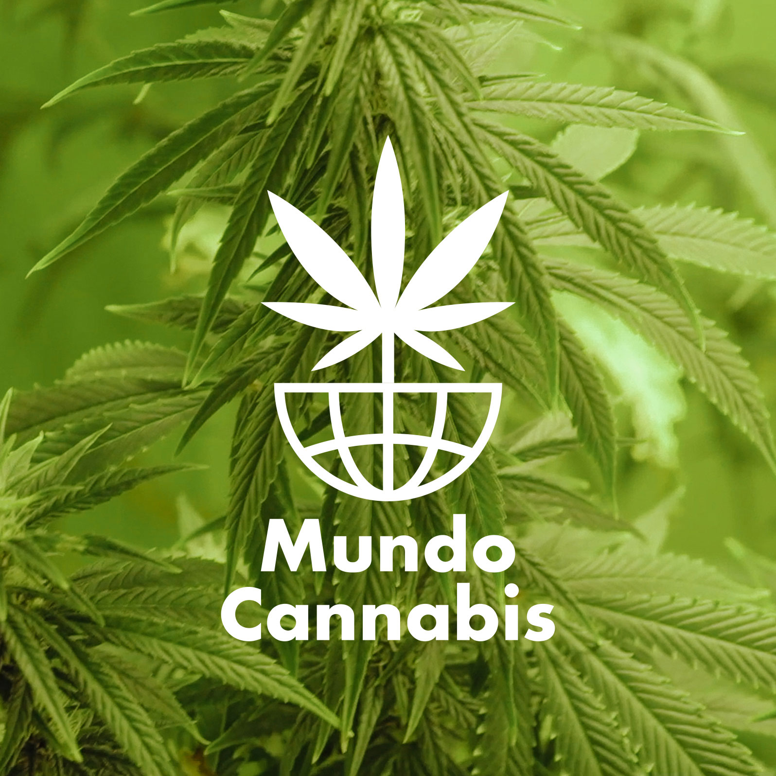 Mundo Cannabis